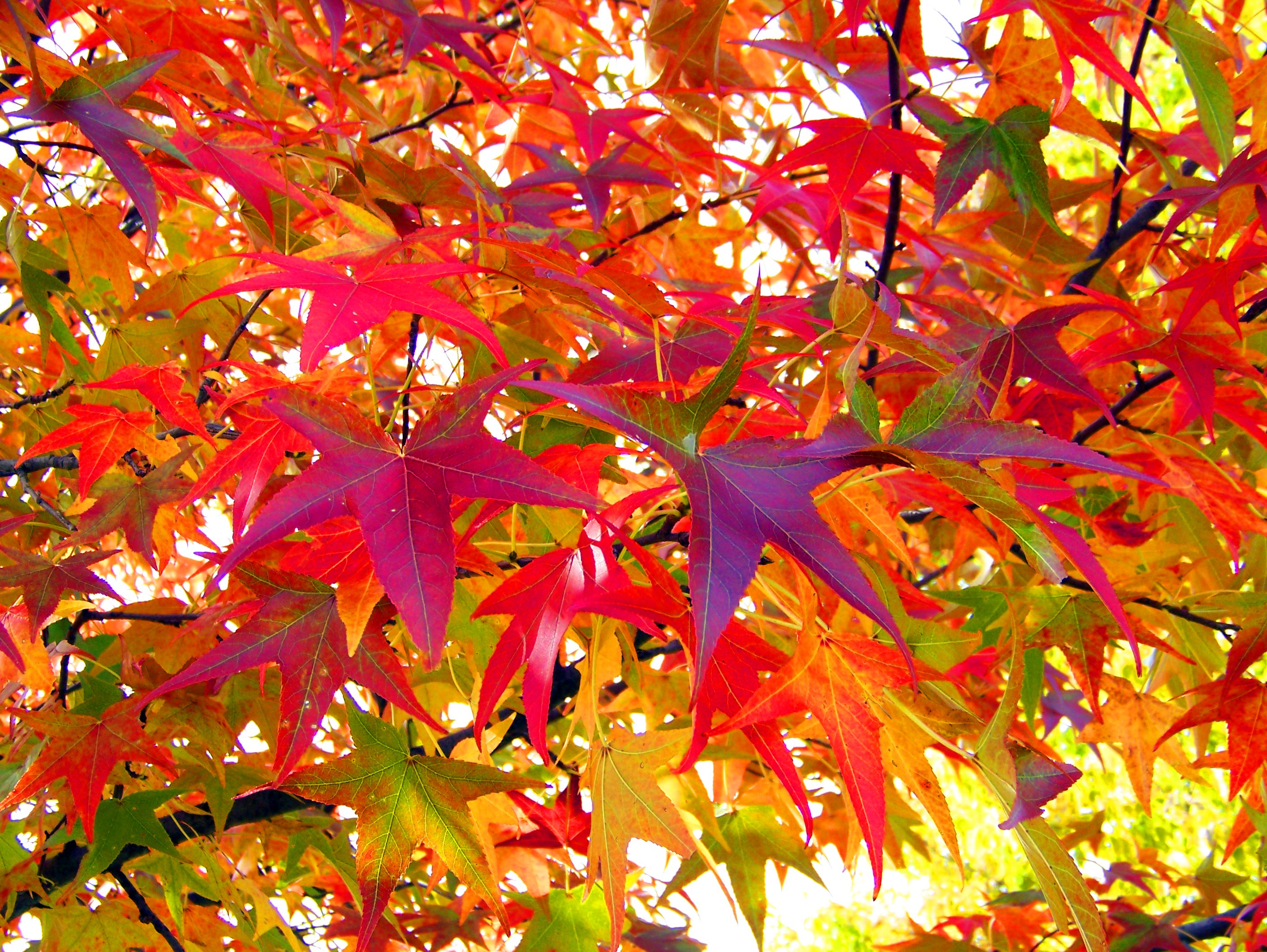 autumn trees colorful leaves - photo #11