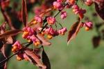 color_autumn_nature
