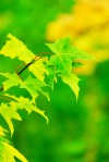 green_and_yellow_leaves_199251
