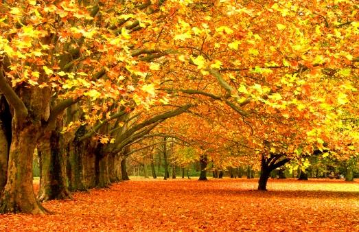 fall_46511