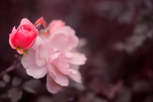 flower_85431790