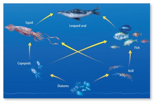 ocean cycle